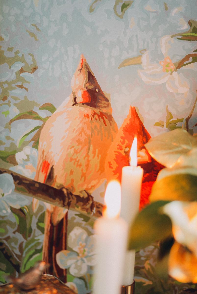 Пение птиц: стилизованная съемка