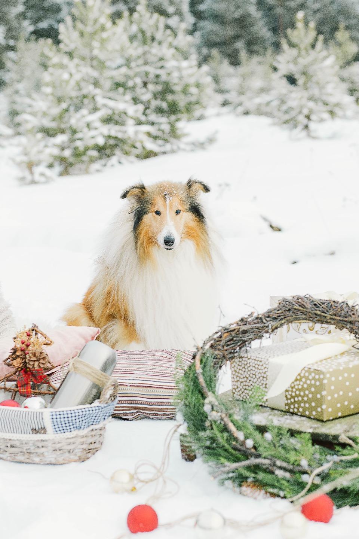 Рождественская прогулка: love-story Дарьи и Артёма