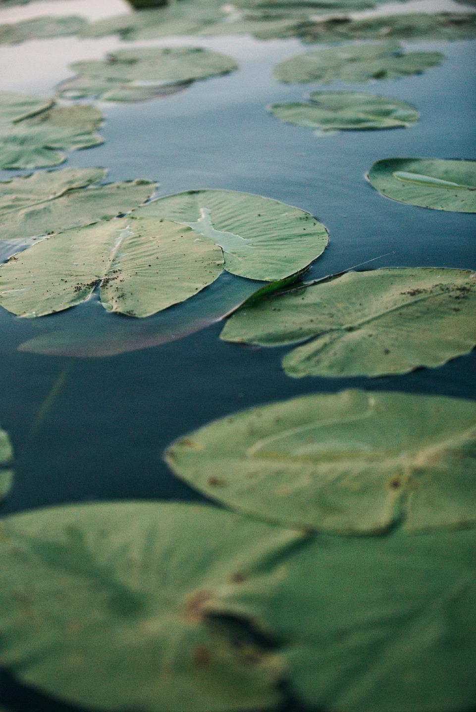 Гармония природы: стилизованная фотосессия
