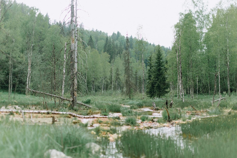 Утро в лесу: стилизованная фотосессия