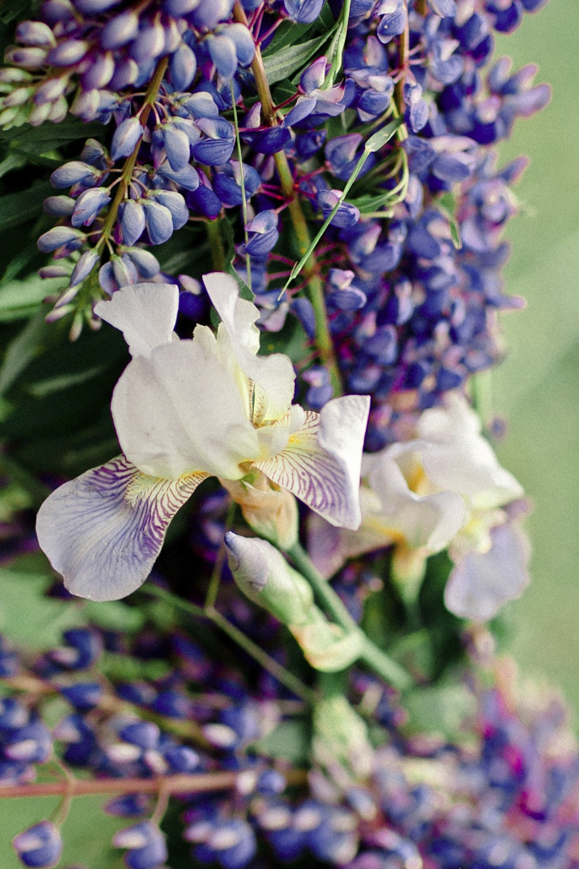 Бархатный цвет люпинов: стилизованная фотосессия Лианы и Андрея