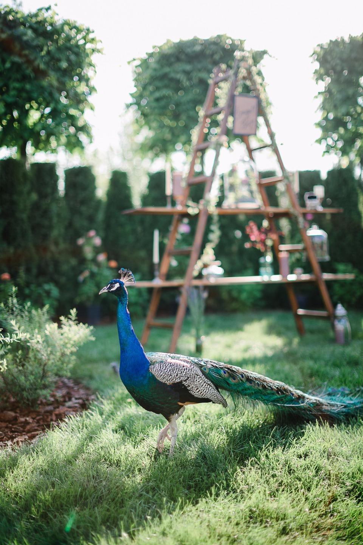 Magic Garden: стилизованная фотосессия